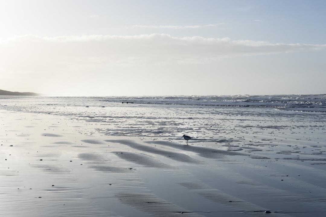 Strandläufer an der Nordsee