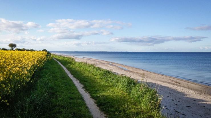 Rapsblüte im Mai an der Ostsee - Pottloch Strand
