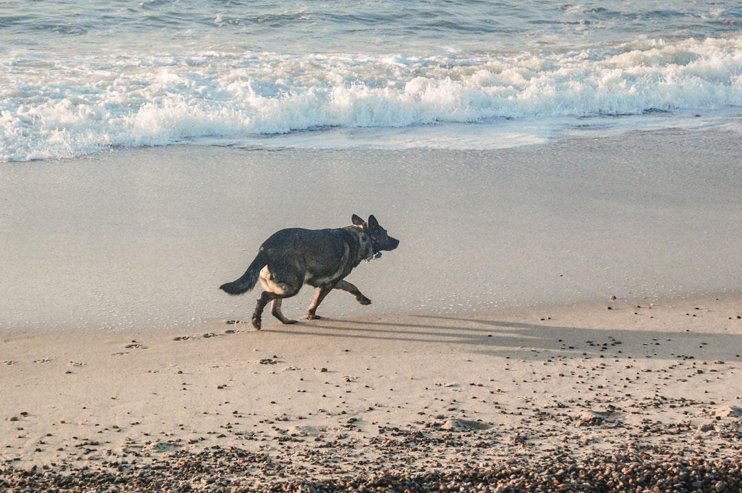 Enspannter Urlaub für Hunde in Dänemark