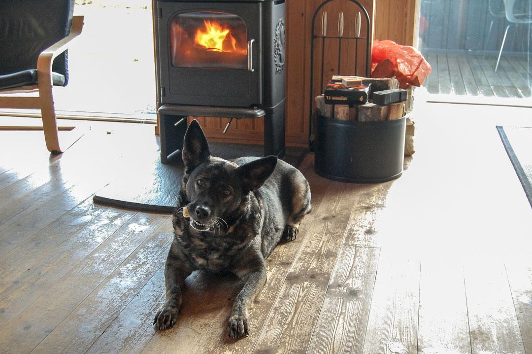 Urlaub mit Hund im Ferienhaus