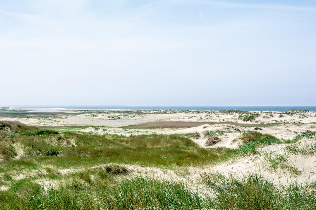 Dünenlandschaft auf Rømø